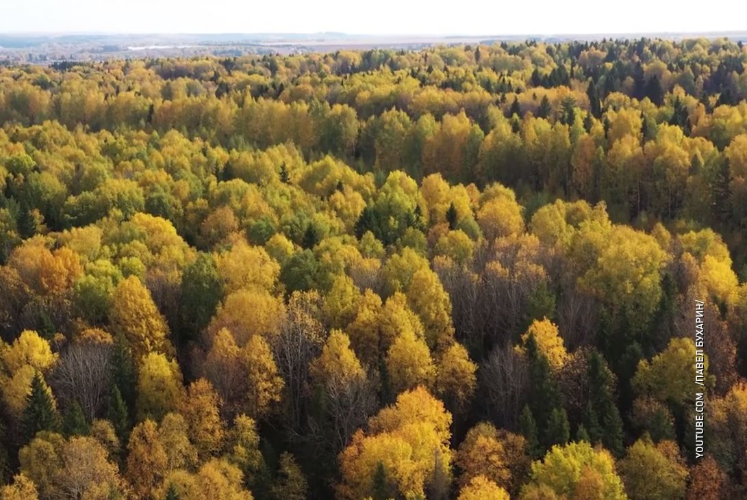 Посади дерево и выиграй 50 тысяч: ярославцы могут поучаствовать в экологическом конкурса