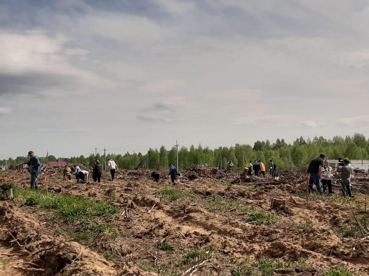 В Ярославской области высадили ели и сосны в память о маршале Федоре Толбухине