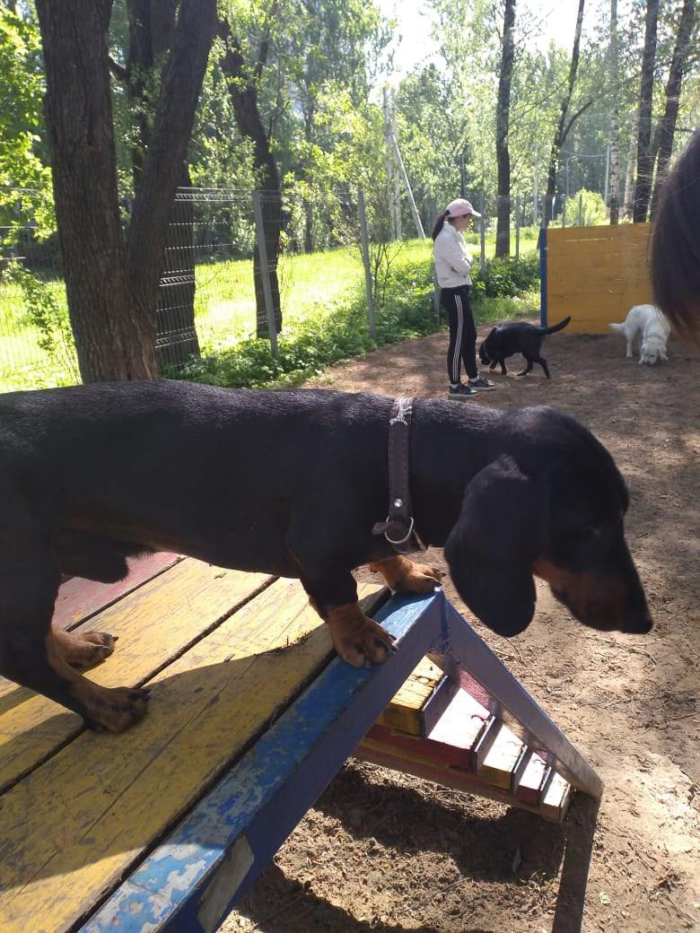 Привязали к дереву и оставили: в Ярославле хозяева бросили на улице собаку
