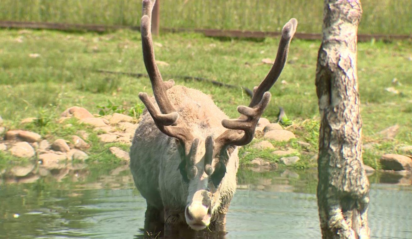 Потеплеет до плюс 37-ми: как в Ярославле переносят жару люди и животные