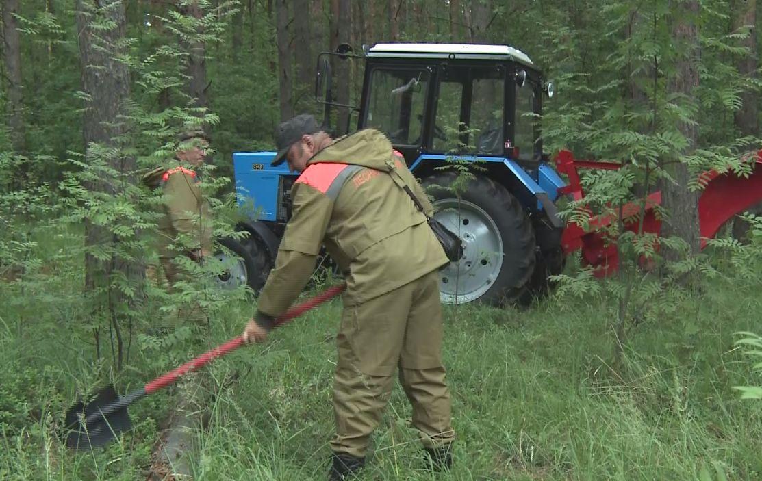В лесах Ярославской области создадут более 800 километров минерализованных полос