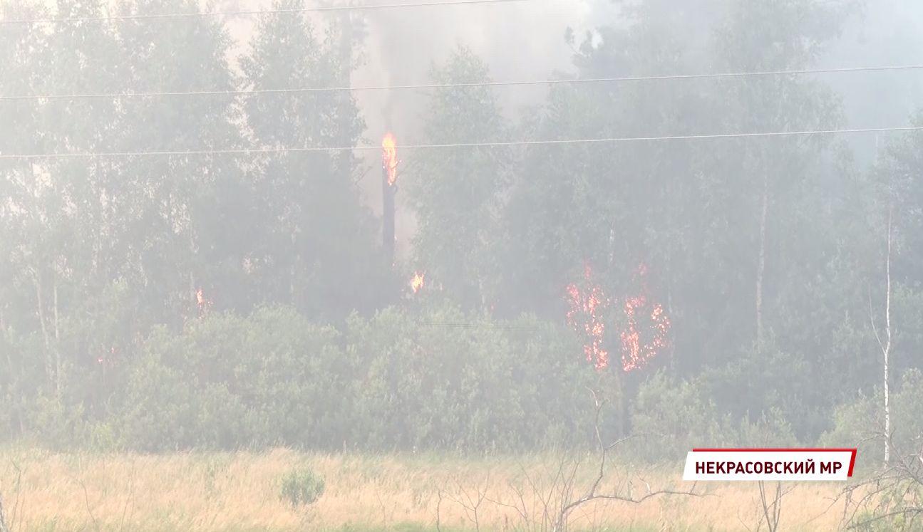В Ярославской области ликвидировали природный пожар к Красного Профинтерна