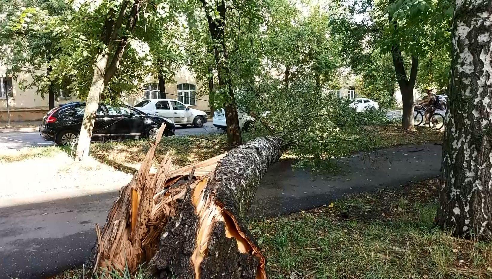 В ночь на 3 августа Ярославль пережил настоящий ураган: вырванные деревья, сорванные крыши и утопающие в воде машины