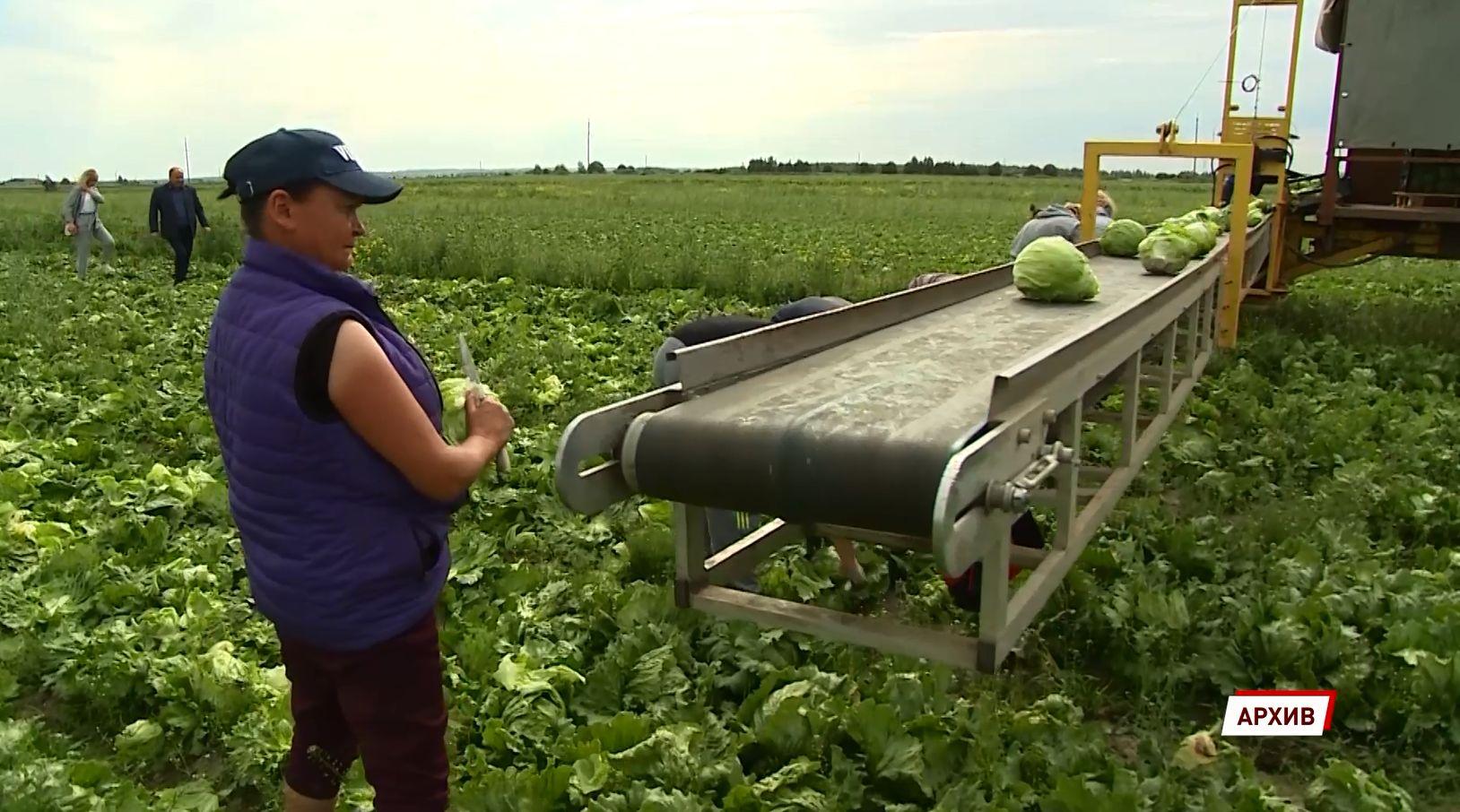 «Борщевой набор» становится доступнее: цены на сезонные овощи в Ярославской области начали снижаться