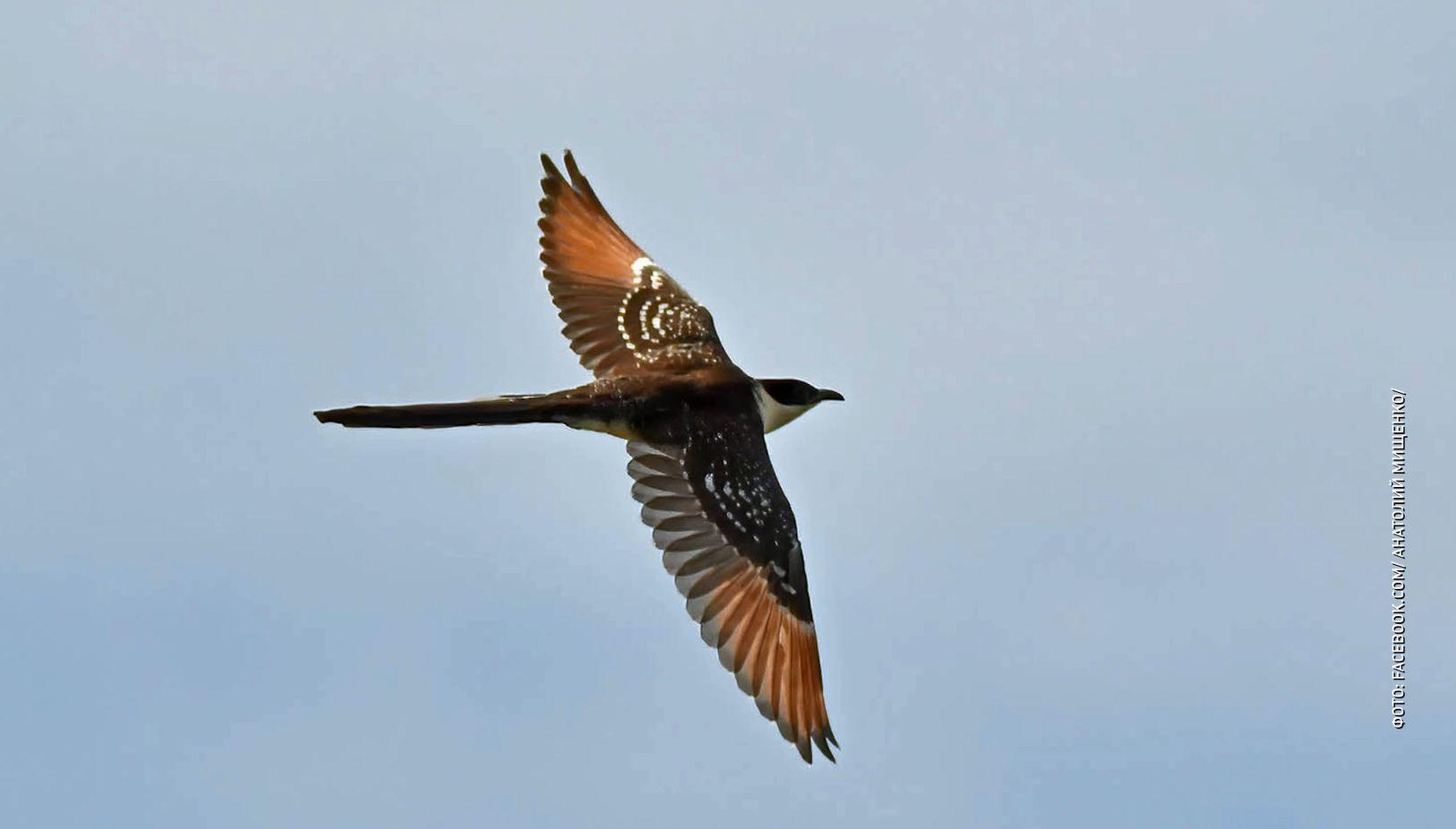 В Ярославской области на Плещеевом озере обнаружили необычную птицу