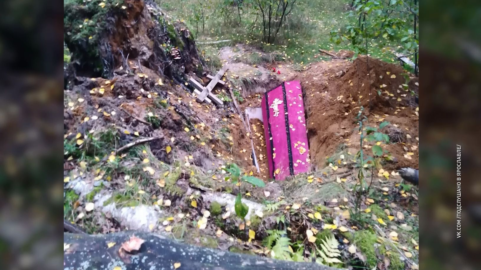Жуткую находку в березняке у поселка Дубки Ярославского района обнаружили грибники