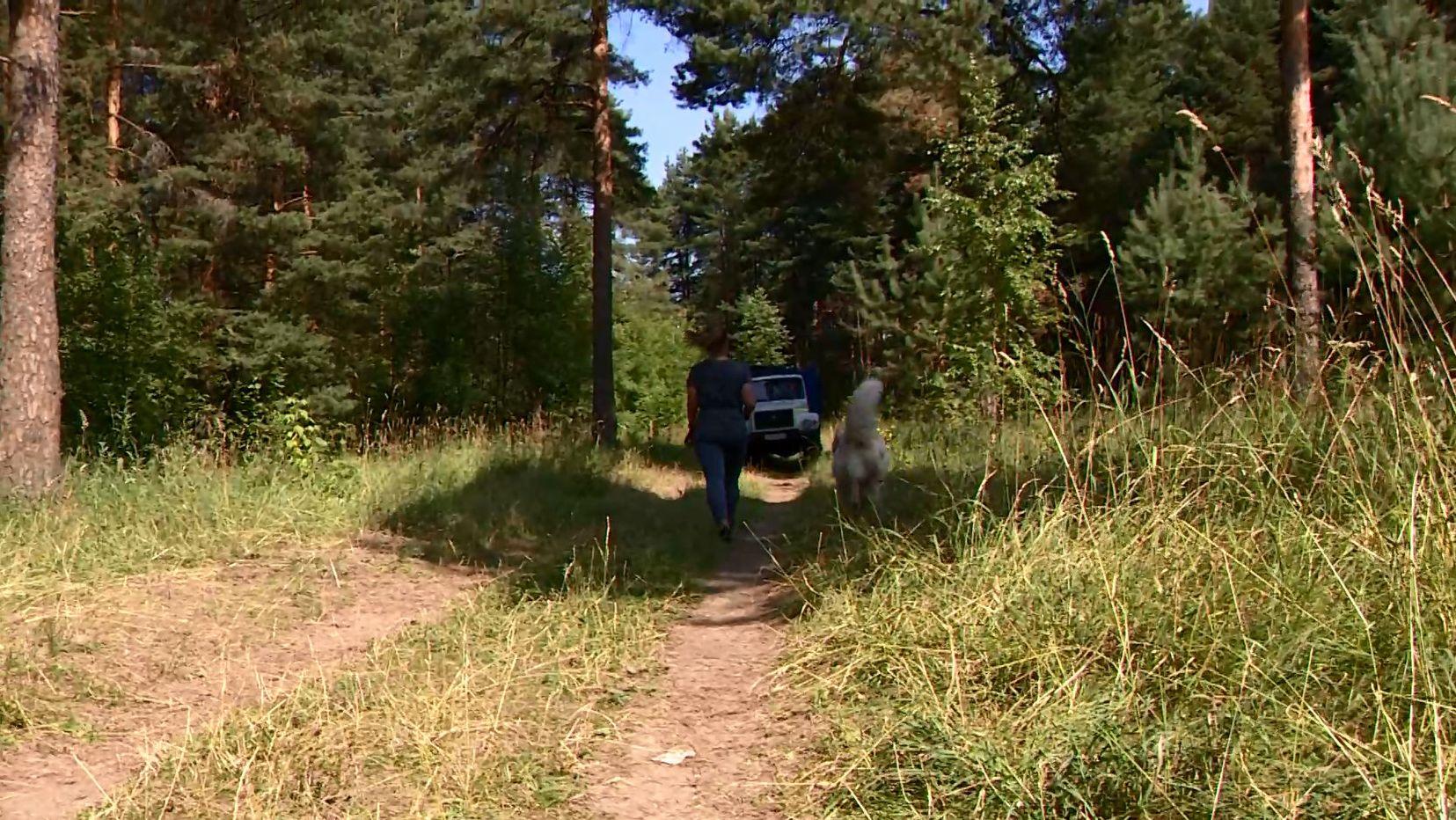 С начала сентября в Ярославской области в полицию поступило 11 сообщений о заблудившихся в лесах гражданах