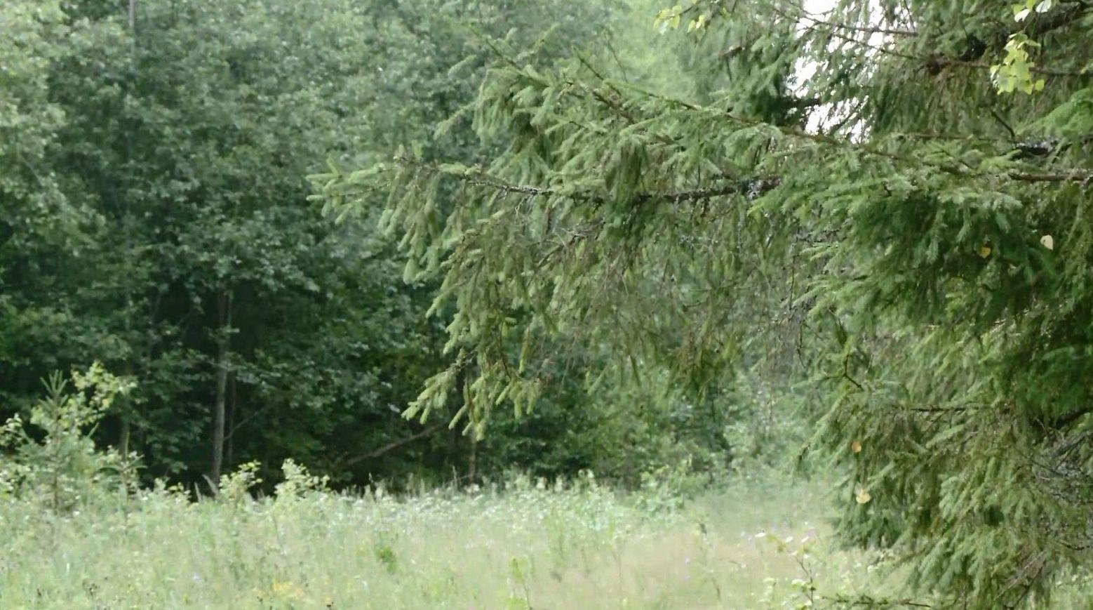 Сезон охоты на зайцев и лис открыли в Ярославской области