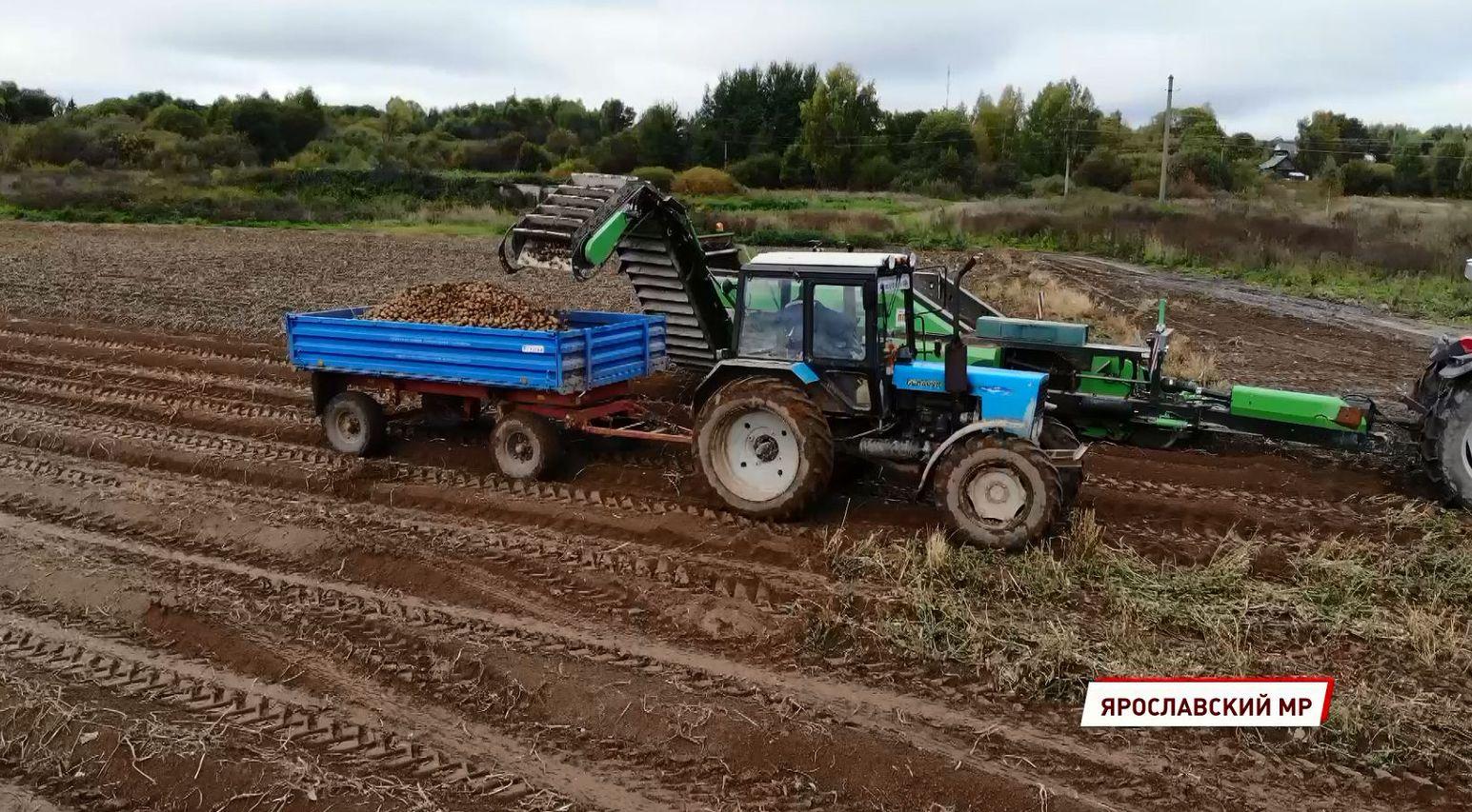 В Ярославской области продолжается уборка урожая