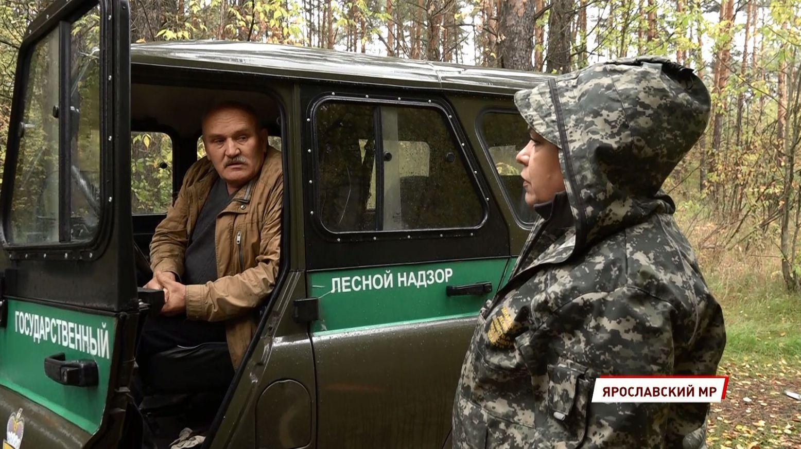 В Ярославской области в 2021 году с нарушителей лесного законодательства взыскано 11,5 миллионов рублей