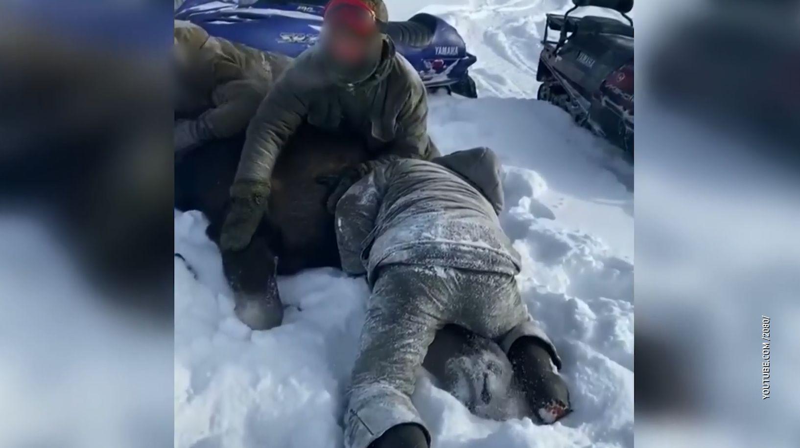 Ярославских и тверских охотников будут судить за убийство беременной лосихи