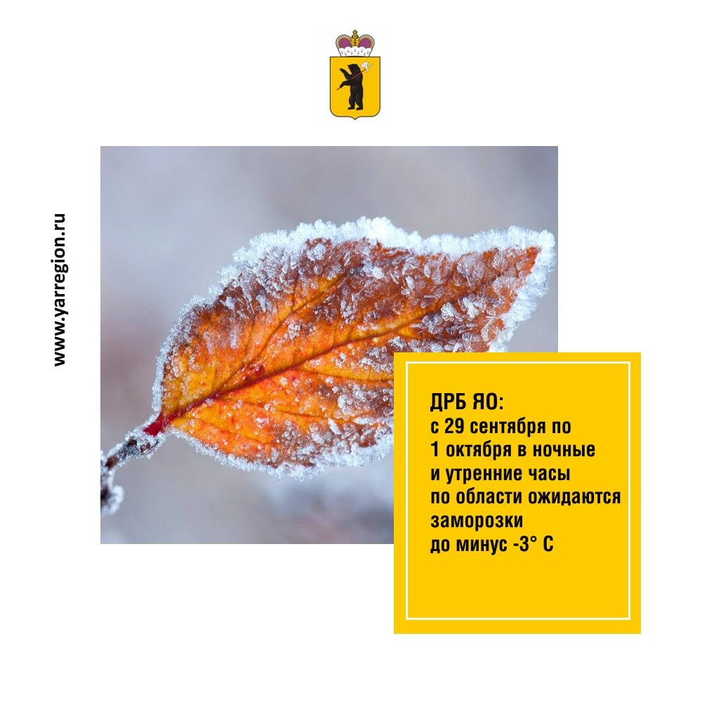 В ночные и утренние часы по Ярославской области ожидаются заморозки