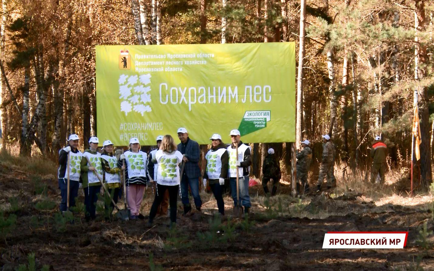 Вместо сгоревшего леса через несколько лет появится новый бор – в Ярославле прошло мероприятие в рамках акции «Сохраним лес»