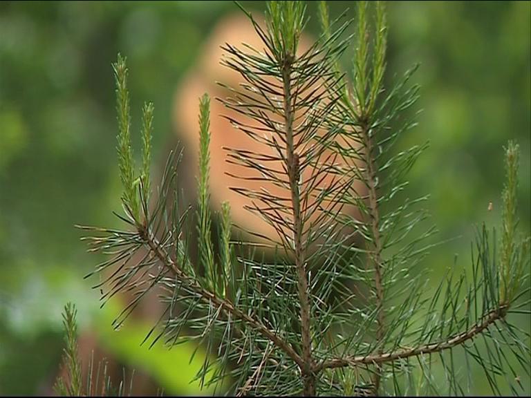 Праздники закончились: куда сдать елку, чтобы она принесла пользу