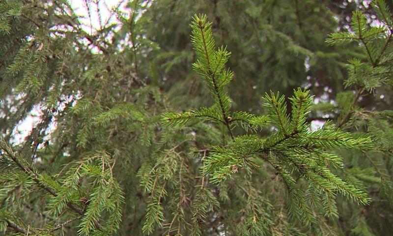 Дмитрий Миронов: «Сохранение и рациональное использование лесных ресурсов - приоритетное направление деятельности правительства»