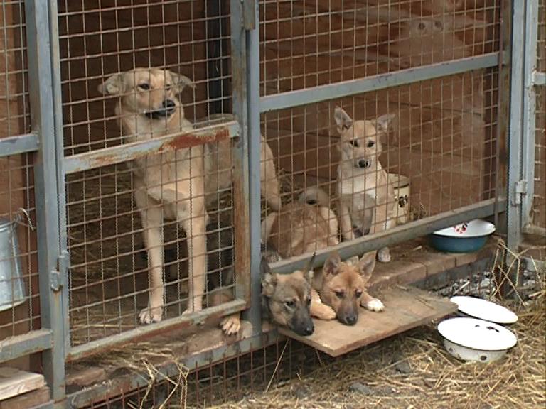 В Ярославле пройдет аукцион по отлову и содержанию бездомных животных