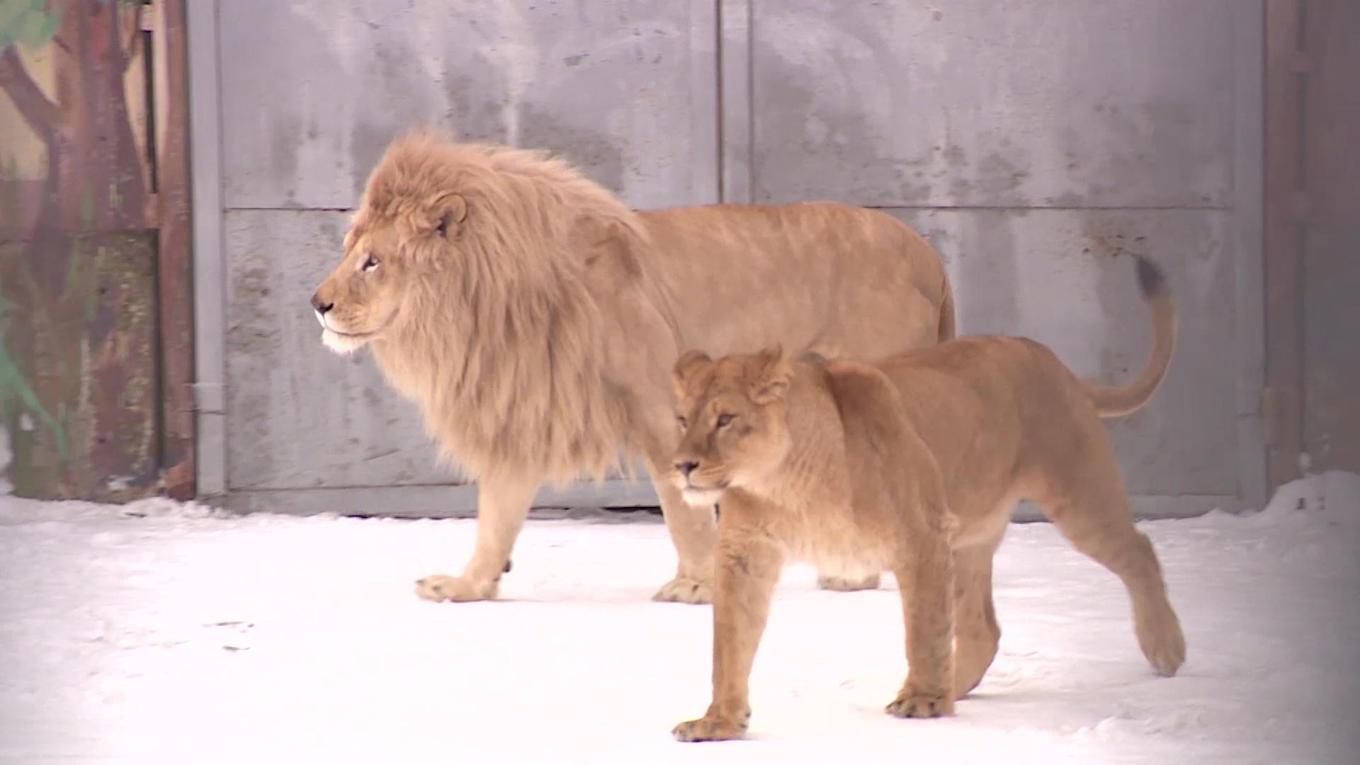 Ярославский зоопарк временно закрыли для посещений