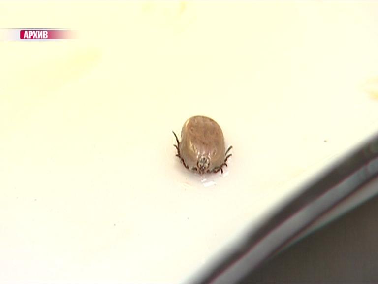 В Ярославской области активизировались клещи: уже почти 90 укушенных