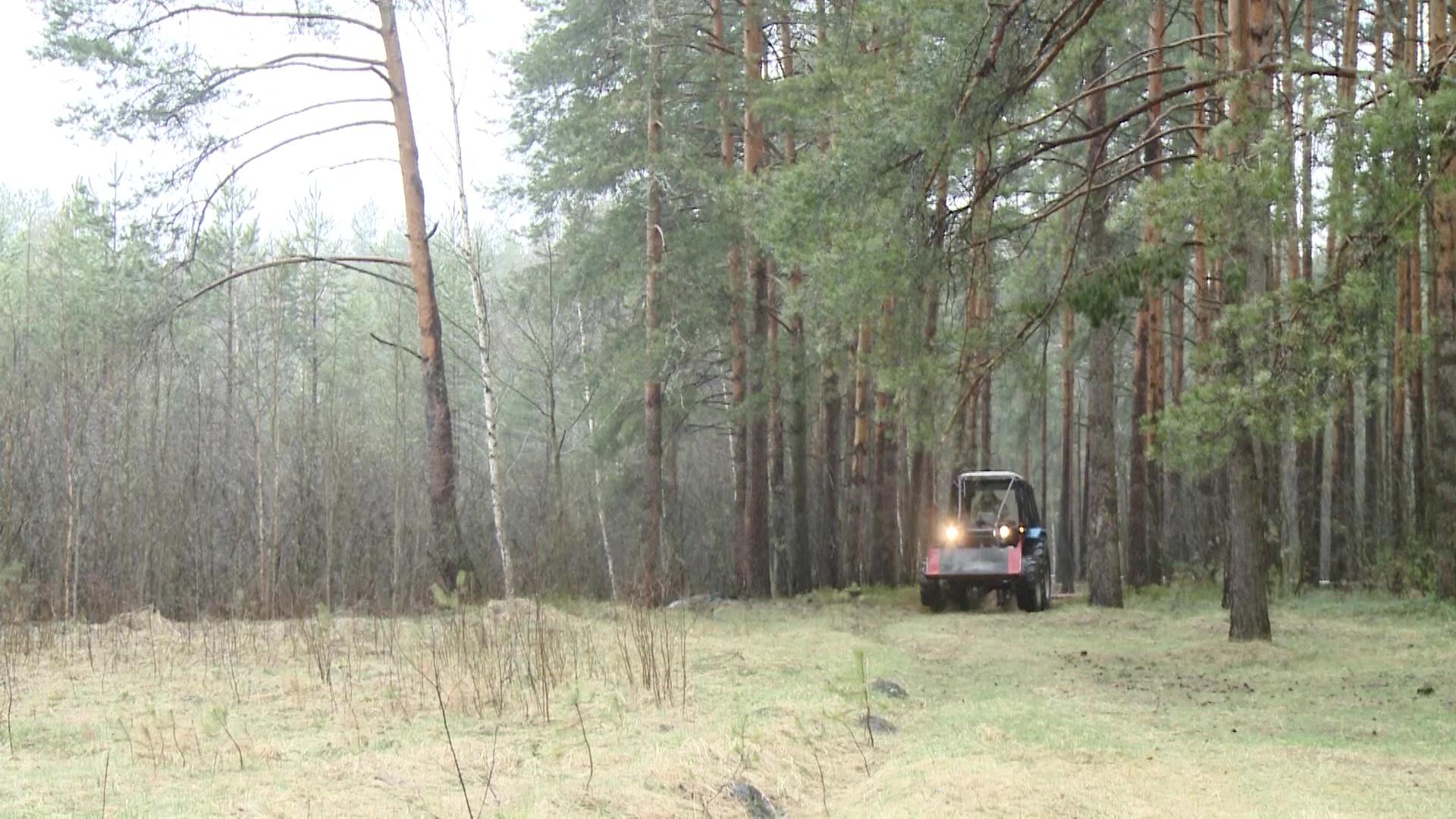 В Ярославской области на три недели запретили посещать леса