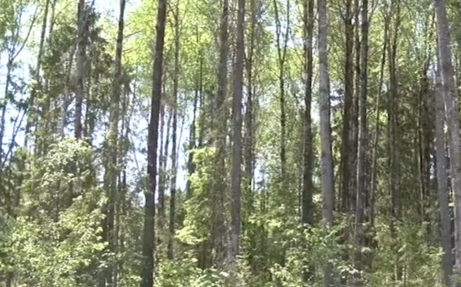 В Ярославской области объявлен оранжевый уровень опасности