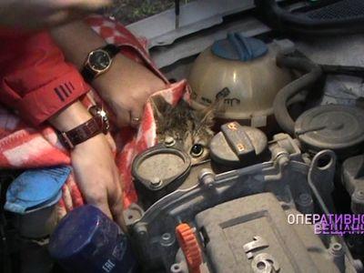 Залез погреться: в Ярославле развернулась операция по спасению кота из моторного отсека